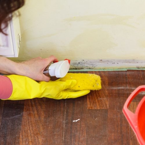 expert-mold-removal