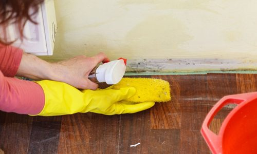mold-removal-surface